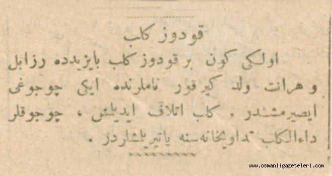Bayezid'de kuduz köpek dehşeti